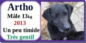 SERBIE - chiens prêts à rentrer (refuge de Bella et pensions) - Etat au 15 aout 2021 Artho10