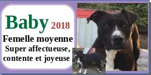 SERBIE - chiens prêts à rentrer (refuge de Bella et pensions) - Etat au 15 aout 2021 Baby10
