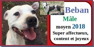 SERBIE - chiens prêts à rentrer (refuge de Bella et pensions) - Etat au 15 aout 2021 Beban110