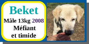 SERBIE - chiens prêts à rentrer (refuge de Bella et pensions) - Etat au 15 aout 2021 Becket10