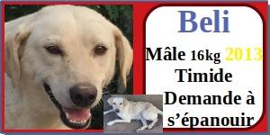 SERBIE - chiens prêts à rentrer (refuge de Bella et pensions) - Etat au 15 aout 2021 Beli10