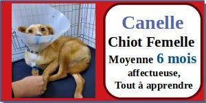 SERBIE - chiens prêts à rentrer (refuge de Bella et pensions) - Etat au 15 aout 2021 Canell10