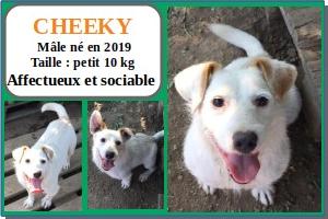 SERBIE - chiens prêts à rentrer (refuge de Bella et pensions) Cheeky10