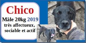 SERBIE - chiens prêts à rentrer (refuge de Bella et pensions) - Etat au 15 aout 2021 Chico10