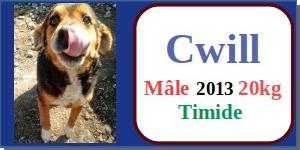 SERBIE - chiens prêts à rentrer (refuge de Bella et pensions) - Etat au 15 aout 2021 Cwill10