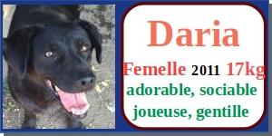 SERBIE - chiens prêts à rentrer (refuge de Bella et pensions) - Etat au 15 aout 2021 Daria10