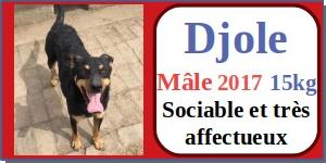 SERBIE - chiens prêts à rentrer (refuge de Bella et pensions) - Etat au 15 aout 2021 Djole10
