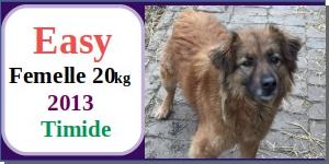 SERBIE - chiens prêts à rentrer (refuge de Bella et pensions) - Etat au 15 aout 2021 Easy10