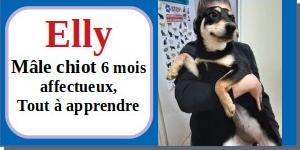 SERBIE - chiens prêts à rentrer (refuge de Bella et pensions) - Etat au 15 aout 2021 Elly10