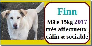 SERBIE - chiens prêts à rentrer (refuge de Bella et pensions) - Etat au 15 aout 2021 Finn10