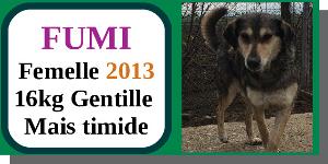 SERBIE - chiens prêts à rentrer (refuge de Bella et pensions) - Etat au 15 aout 2021 Fumi10