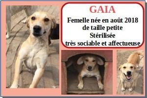 SERBIE - chiens prêts à rentrer (refuge de Bella et pensions) Gaia10