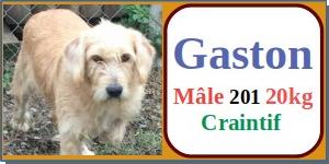 SERBIE - chiens prêts à rentrer (refuge de Bella et pensions) - Etat au 15 aout 2021 Gaston10