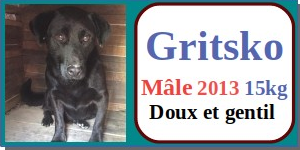 SERBIE - chiens prêts à rentrer (refuge de Bella et pensions) - Etat au 15 aout 2021 Gritsk10