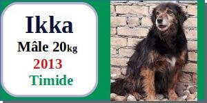 SERBIE - chiens prêts à rentrer (refuge de Bella et pensions) - Etat au 15 aout 2021 Ikka10