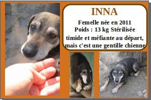 SERBIE - chiens prêts à rentrer (refuge de Bella et pensions) Inna10