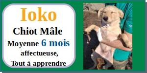 SERBIE - chiens prêts à rentrer (refuge de Bella et pensions) - Etat au 15 aout 2021 Ioko10