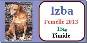 SERBIE - chiens prêts à rentrer (refuge de Bella et pensions) - Etat au 15 aout 2021 Izba10