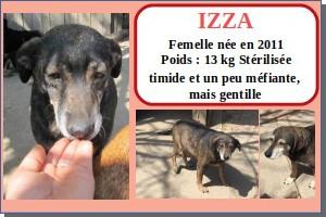 SERBIE - chiens prêts à rentrer (refuge de Bella et pensions) Izza10