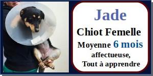 SERBIE - chiens prêts à rentrer (refuge de Bella et pensions) - Etat au 15 aout 2021 Jade10