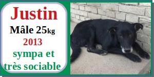 SERBIE - chiens prêts à rentrer (refuge de Bella et pensions) - Etat au 15 aout 2021 Justin10