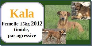 SERBIE - chiens prêts à rentrer (refuge de Bella et pensions) - Etat au 15 aout 2021 Kala10