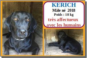 SERBIE - chiens prêts à rentrer (refuge de Bella et pensions) Kerich11