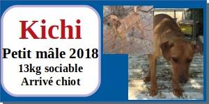 SERBIE - chiens prêts à rentrer (refuge de Bella et pensions) - Etat au 15 aout 2021 Kichi10