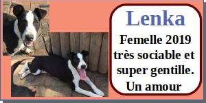 SERBIE - chiens prêts à rentrer (refuge de Bella et pensions) - Etat au 15 aout 2021 Lenka10