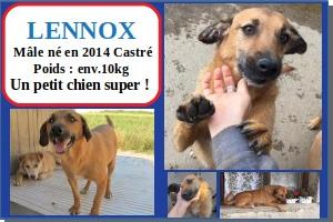 SERBIE - chiens prêts à rentrer (refuge de Bella et pensions) Lennox10