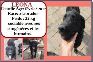 SERBIE - chiens prêts à rentrer (refuge de Bella et pensions) Leona10