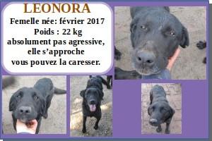 SERBIE - chiens prêts à rentrer (refuge de Bella et pensions) Leonor11