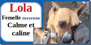 SERBIE - chiens prêts à rentrer (refuge de Bella et pensions) - Etat au 15 aout 2021 Lola10