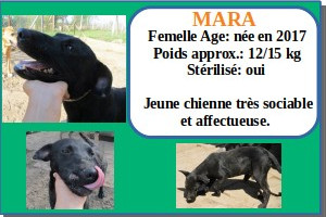 SERBIE - chiens prêts à rentrer (refuge de Bella et pensions) Mara10