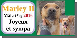 SERBIE - chiens prêts à rentrer (refuge de Bella et pensions) - Etat au 15 aout 2021 Marley10