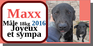 SERBIE - chiens prêts à rentrer (refuge de Bella et pensions) - Etat au 15 aout 2021 Maxx10