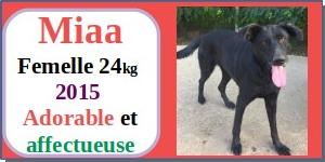SERBIE - chiens prêts à rentrer (refuge de Bella et pensions) - Etat au 15 aout 2021 Miaa110