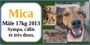 SERBIE - chiens prêts à rentrer (refuge de Bella et pensions) - Etat au 15 aout 2021 Mica10