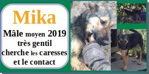 SERBIE - chiens prêts à rentrer (refuge de Bella et pensions) - Etat au 15 aout 2021 Mika10