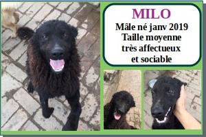 SERBIE - chiens prêts à rentrer (refuge de Bella et pensions) Milo10