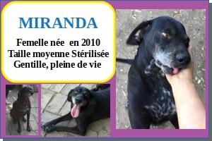 SERBIE - chiens prêts à rentrer (refuge de Bella et pensions) Mirand10