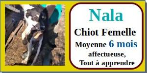 SERBIE - chiens prêts à rentrer (refuge de Bella et pensions) - Etat au 15 aout 2021 Nala10