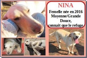SERBIE - chiens prêts à rentrer (refuge de Bella et pensions) Nina10