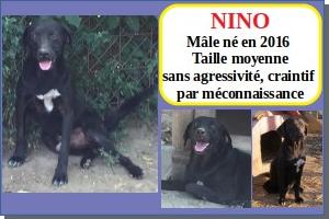 SERBIE - chiens prêts à rentrer (refuge de Bella et pensions) Nino10