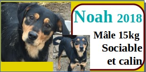 SERBIE - chiens prêts à rentrer (refuge de Bella et pensions) - Etat au 15 aout 2021 Noah10