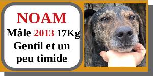 SERBIE - chiens prêts à rentrer (refuge de Bella et pensions) - Etat au 15 aout 2021 Noam10