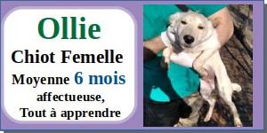 SERBIE - chiens prêts à rentrer (refuge de Bella et pensions) - Etat au 15 aout 2021 Ollie10