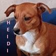SERBIE - chiens prêts à rentrer (refuge de Bella et pensions) P-heid10