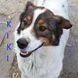 SERBIE - chiens prêts à rentrer (refuge de Bella et pensions) P-kiki11