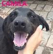 SERBIE - chiens prêts à rentrer (refuge de Bella et pensions) P2cami10